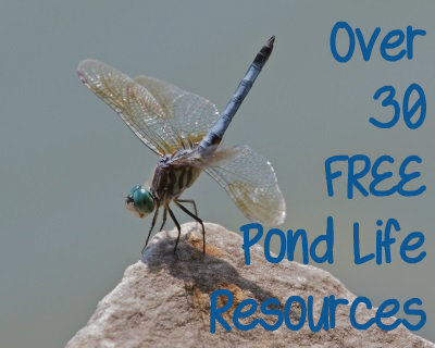 Free Pond Life Resources