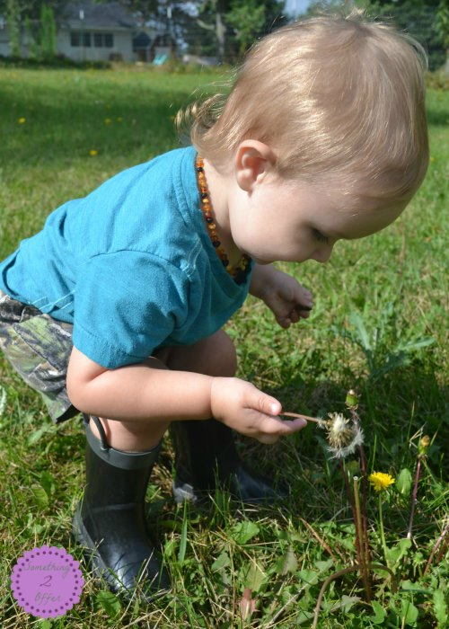 baby with dandelion
