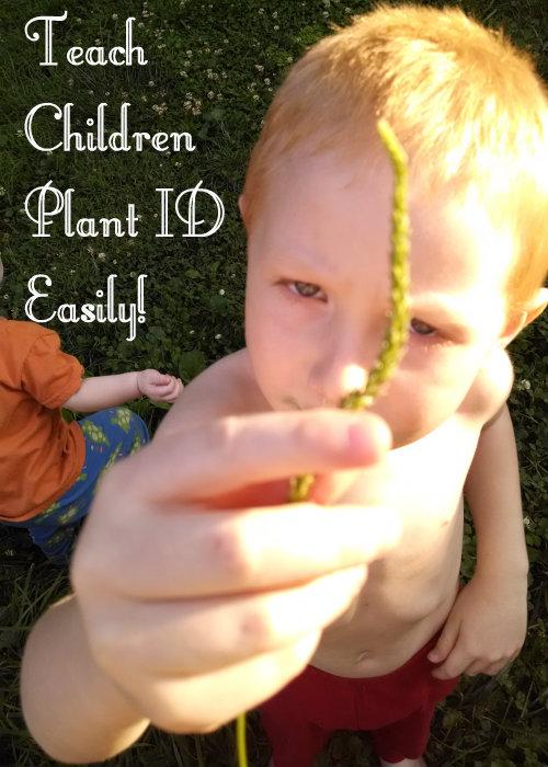 teach plant ID easily