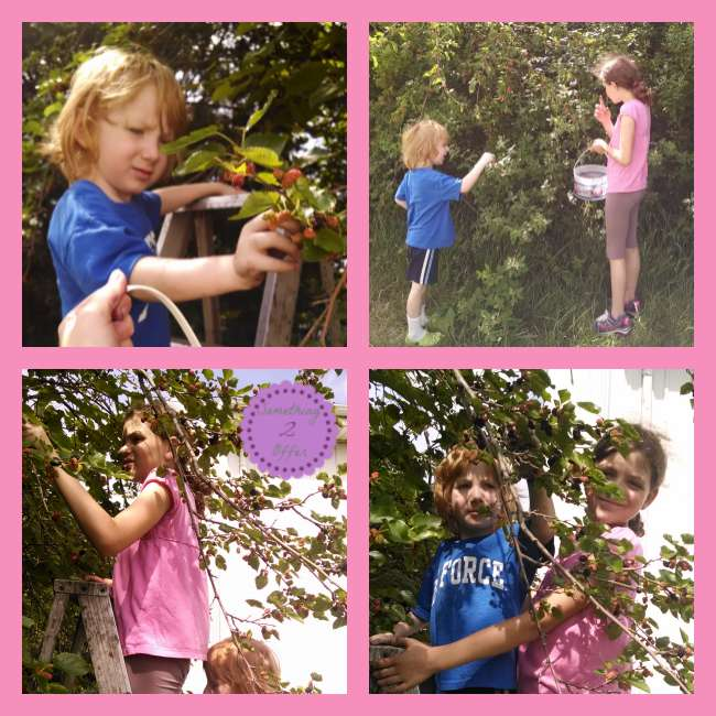 Mulberry Picking SIblings