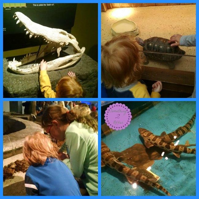 Aquarium touch