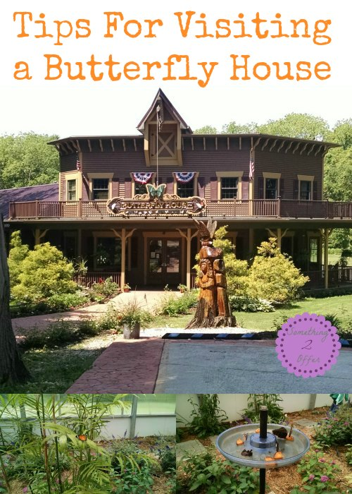 Tips For Visiting a Butterfly House