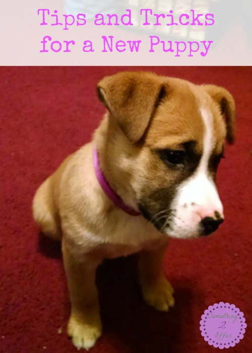 Tips and Tricks for a New Puppy