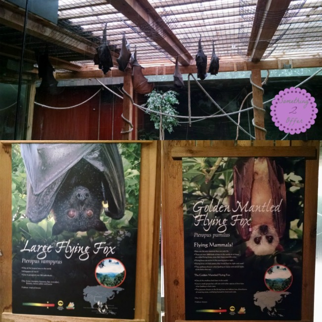 Columbus Zoo Asia Flying Fox