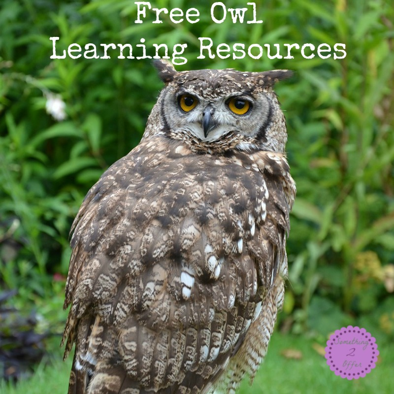 Free Owl Learning Resources