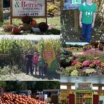 Blooms & Berries Farm Market