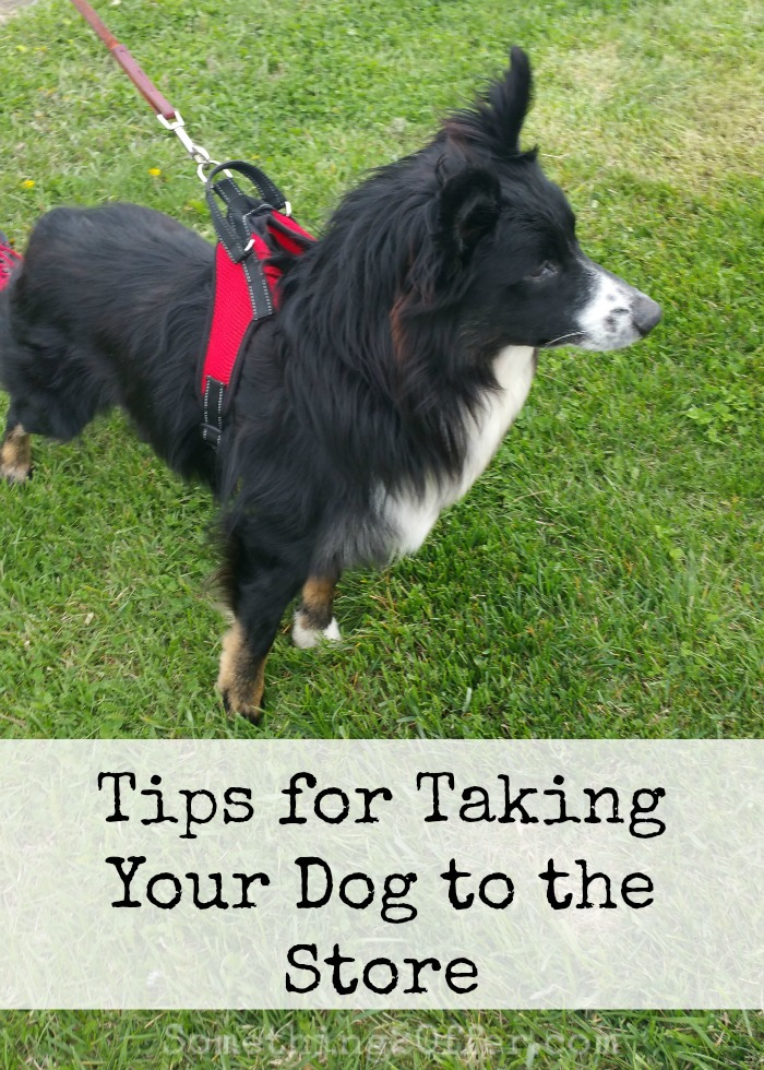 Tips for Taking Your Dog to the Store
