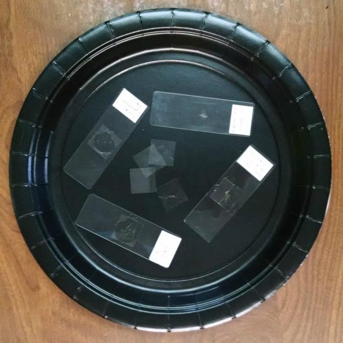 Homemade Microscope Slides