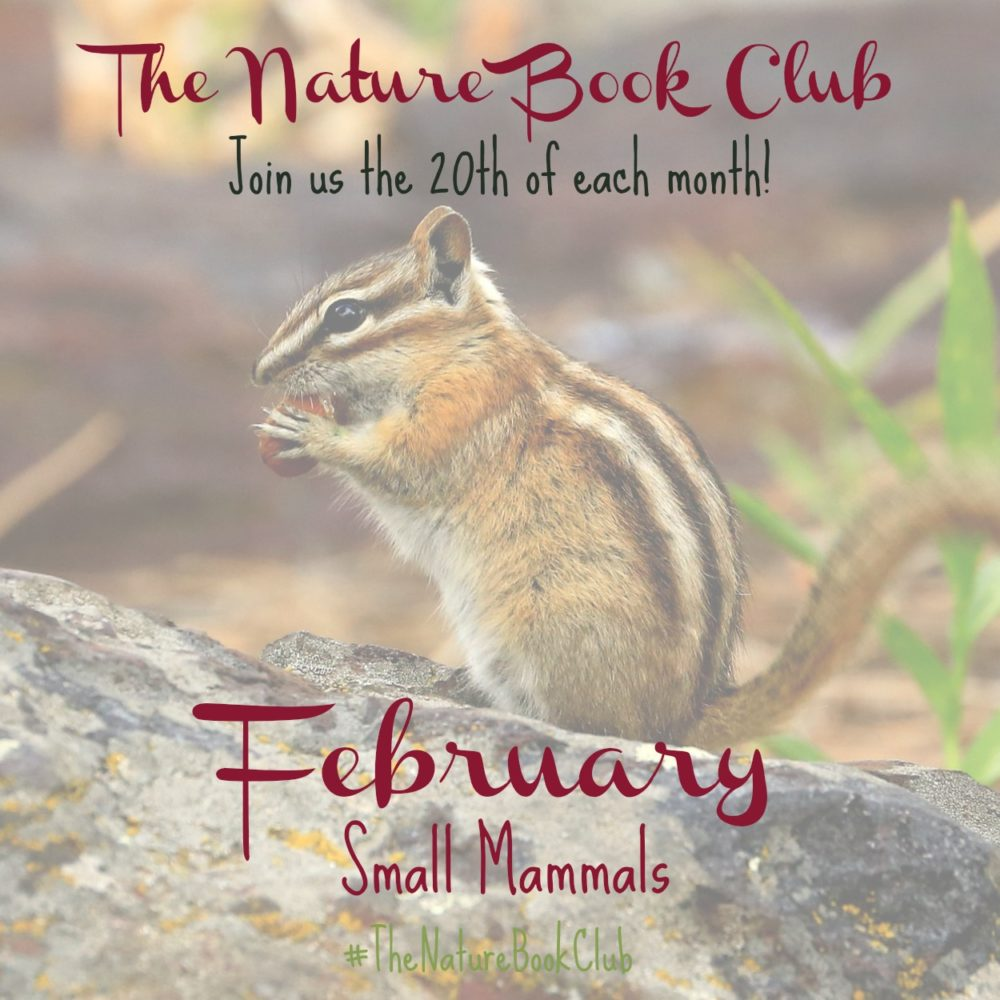 Winter birds and nests scavenger hunt the nature book club theme for february small mammals fandeluxe Images