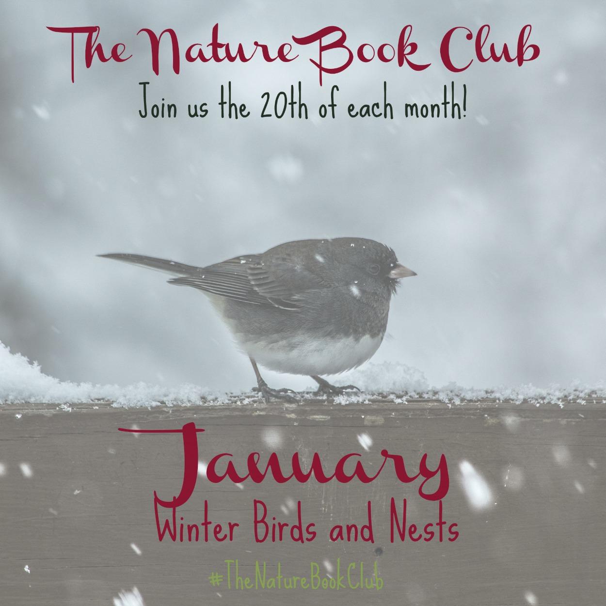 Winter birds and nests scavenger hunt fandeluxe Images