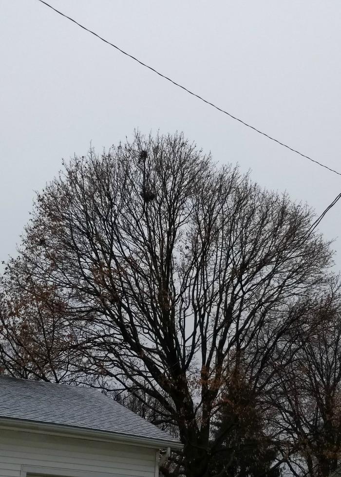 Winter birds and nests scavenger hunt nest at top of tree fandeluxe Images