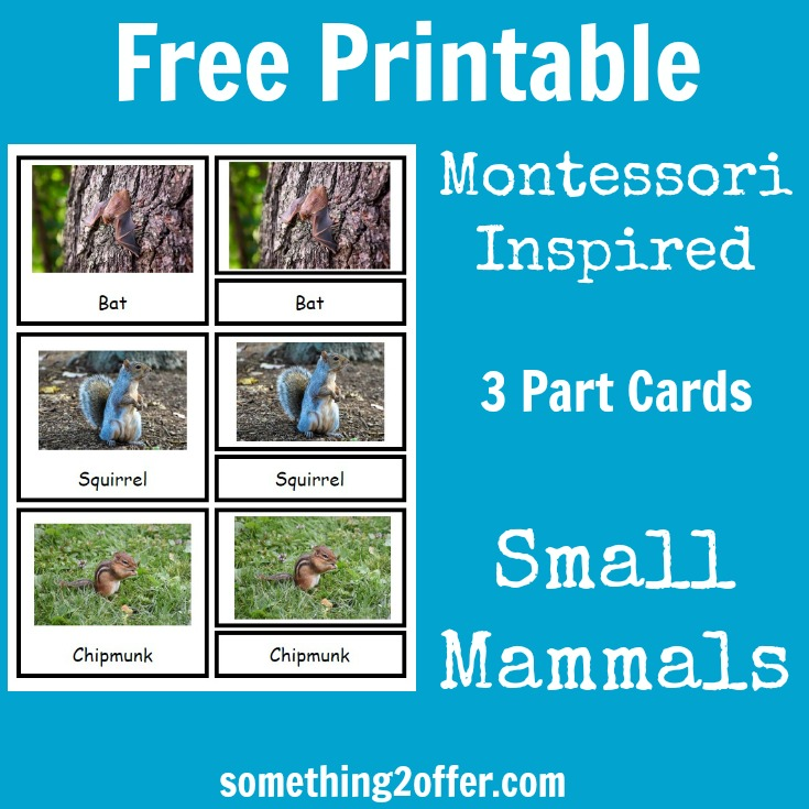 small mammals 3 part cards