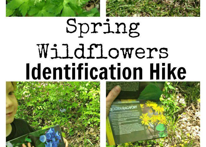 Spring Wildflowers Identification Hike #TheNatureBookClub