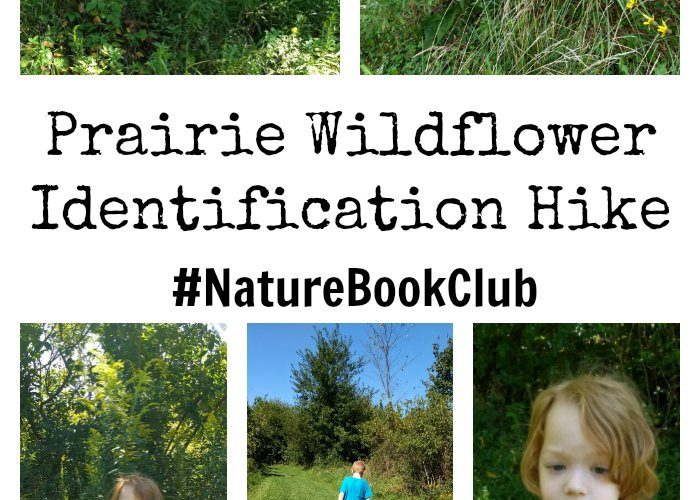 Prairie Wildflower Identification Hike {#NatureBookClub}