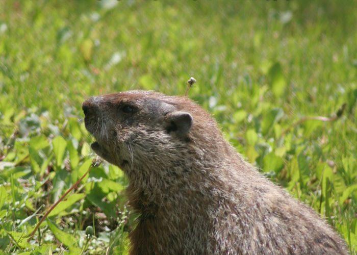 Groundhog Day Books for Kids #booklist #naturestudy